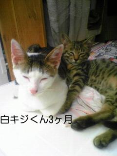 Shirokijikun5m_2